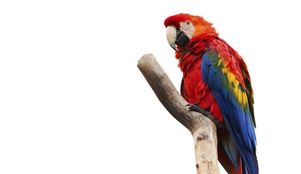 Exotic birds? No worries. -