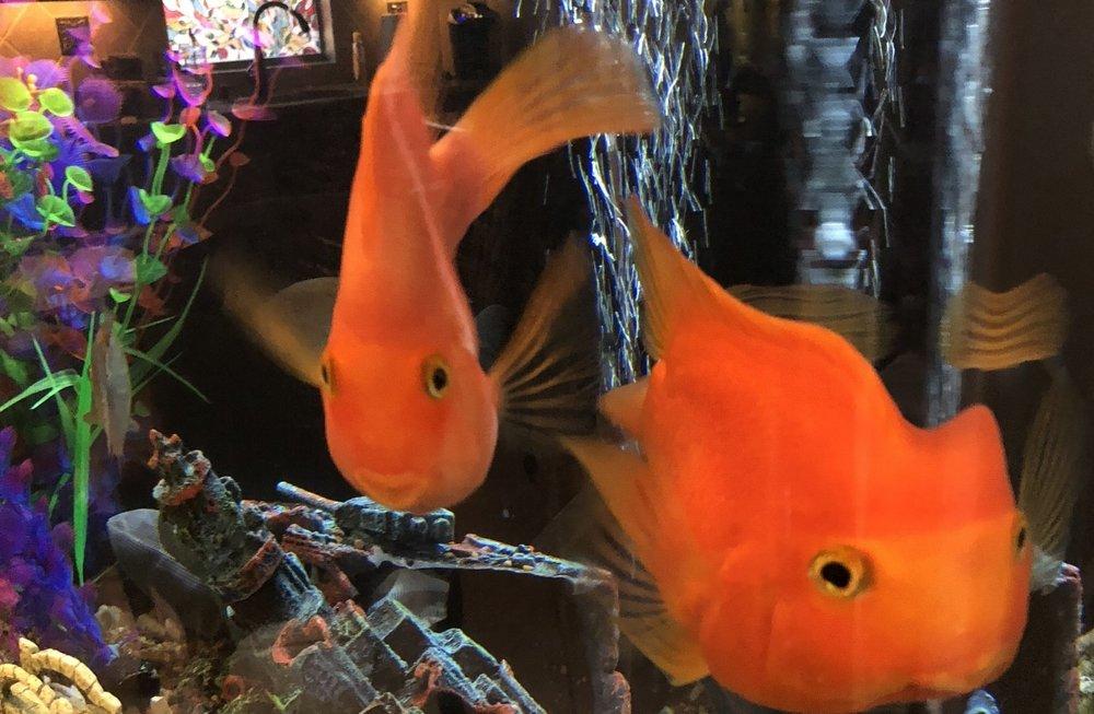 Big ol' aquarium? We'll take care of it. -