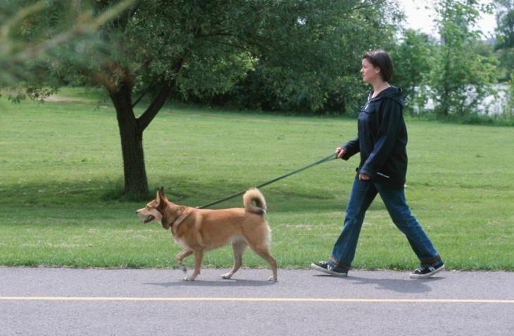 Dog walking. -