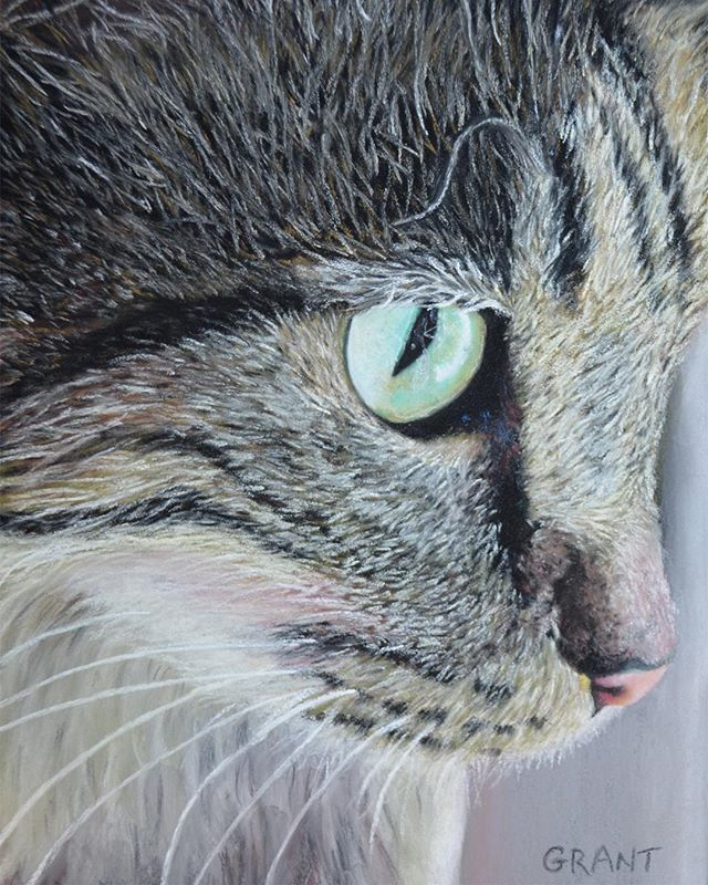#tbt  throwback to a time when I  painted animal portraits. . . . . . #realism #painter #artist #artistsoninstagram #catoftheday #cateyes #catsofinstagram #realistic #artistslife #worldofartists #petportrait #catportrait #catslover #instaart #instaartist #instapict #creative #pastel #fabercastell #lovemyjob #animalart #artoftheday  #artnerd #artistic_share #painting #fineart #originalart #myart #drawing