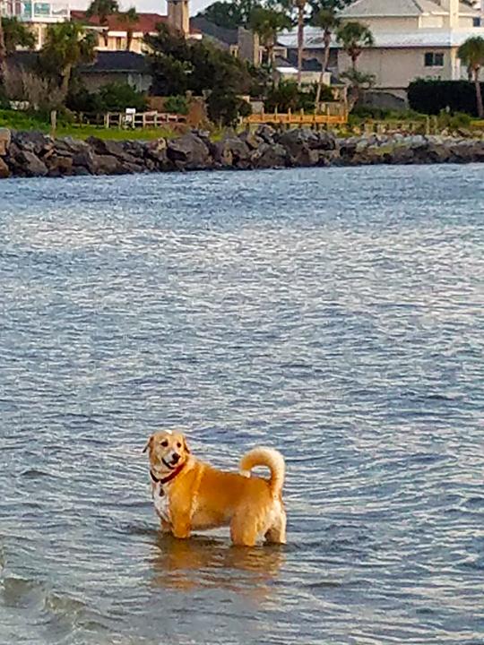 Brodi Loves the Water