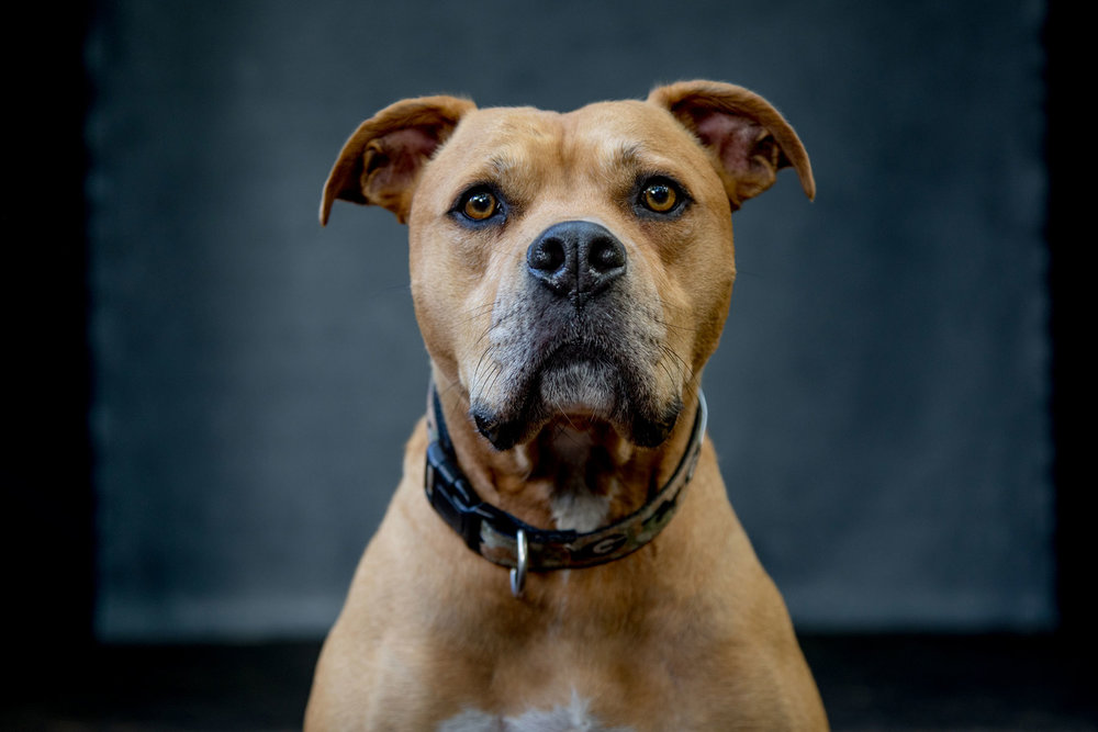 """I love this photo of Mr. Wiggles from the photo shoot at Jason Thrasher's """"Shed Studio."""""""