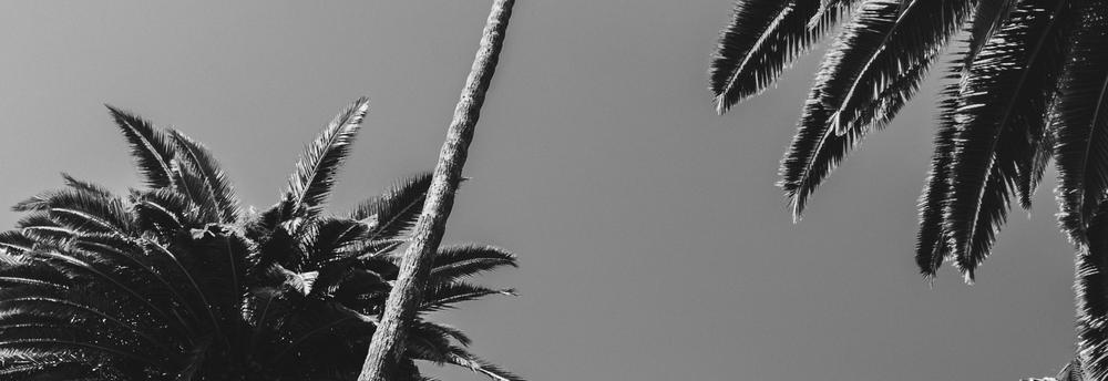 sr-palmtrees-2.png