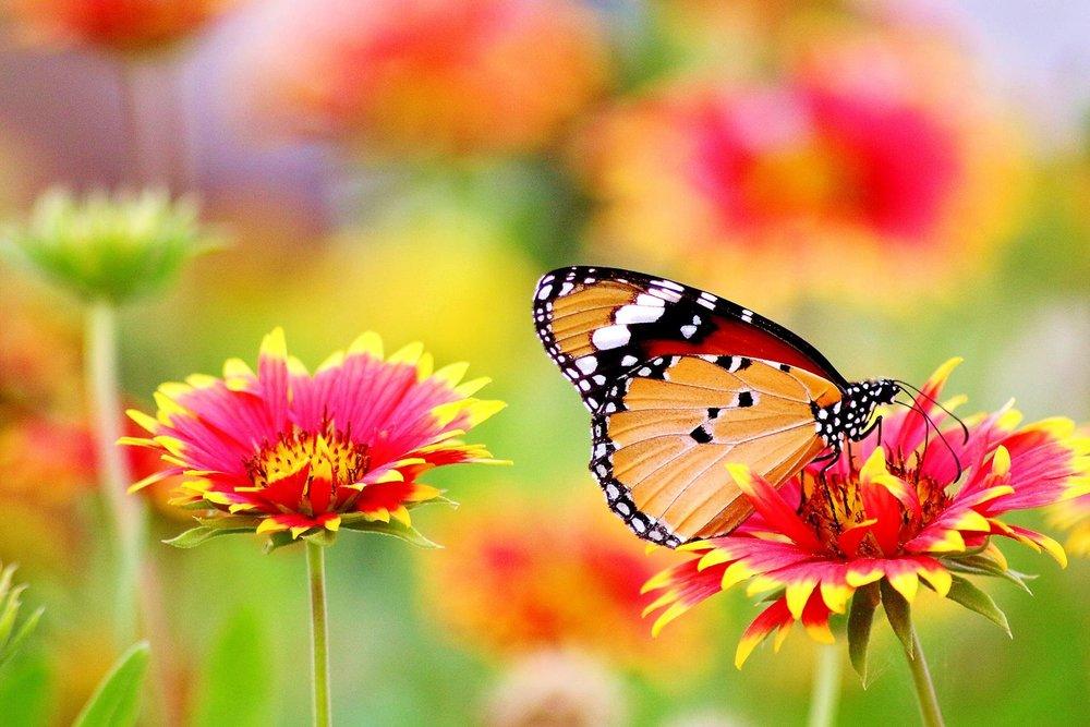 butterfly-wonder.jpg