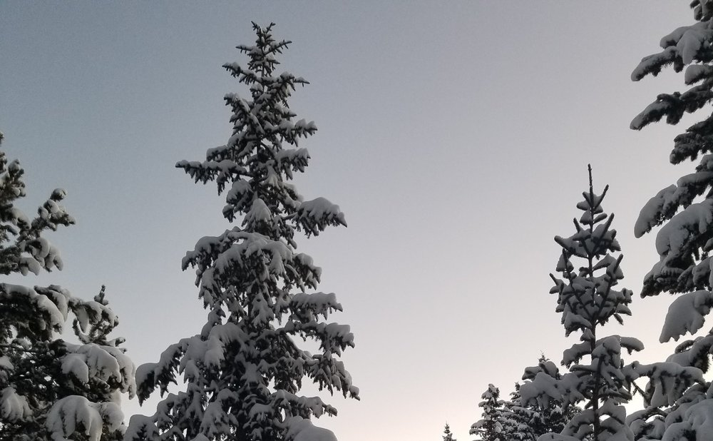 treesone.jpg