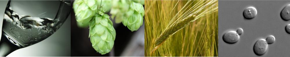 Los 4 ingredientes más importantes de las cervezas modernas son: agua, lúpulo, malta de cebada y levadura. Algunas personas creen que la cerveza sólo puede tener 4 ingredientes debido a la Reinheitsgebot.