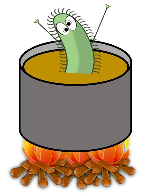 Figura 4 - Las bacterias que pueden estropear el mosto mueren durante el hervido. Supongo que esta bacteria no se está divirtiendo en temperaturas muy altas.