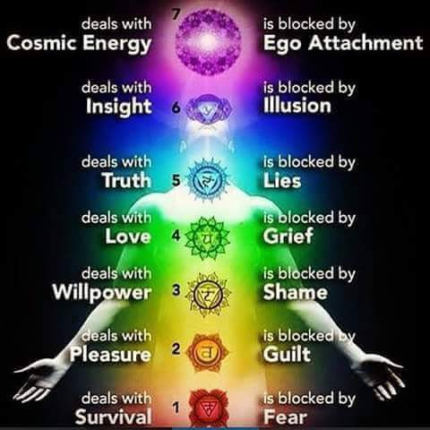 In reference to the image above, the Chakras are: 7) Crown, 6) Third Eye, 5) Throat, 4) Heart, 3) Solar Plexus, 2) Sacral, 1) Root.