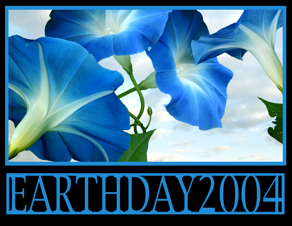Earthday Morning Glories.jpg