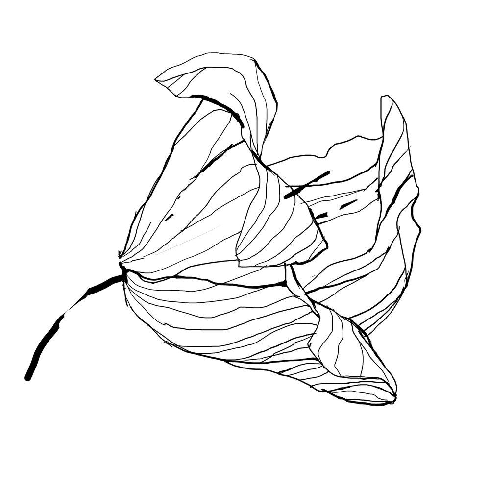 poppy-feb-19-1.jpg