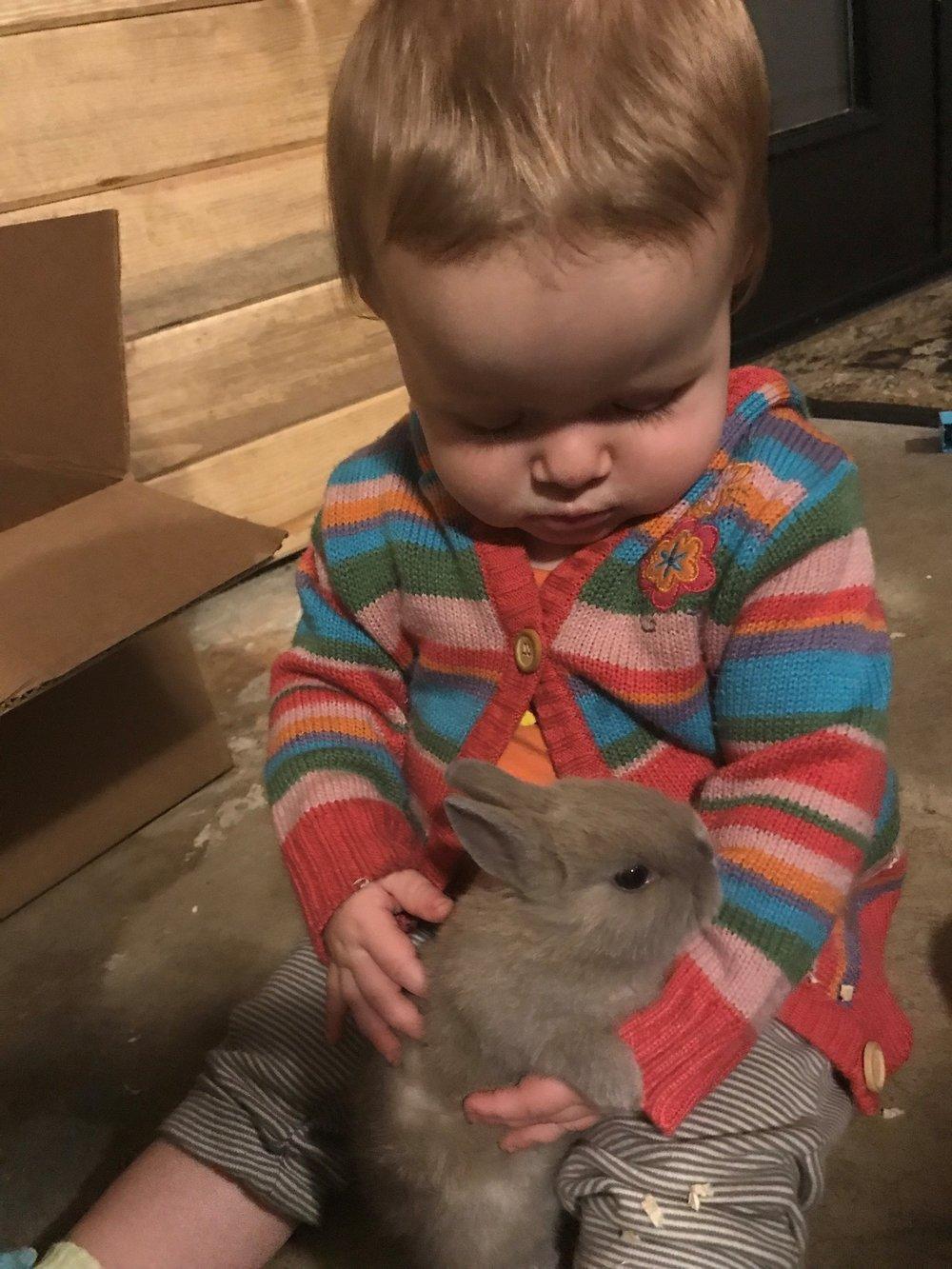 Waverly Bunny.jpg
