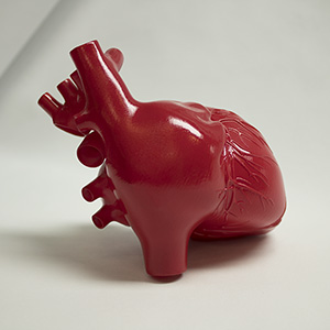A human heart 3D printed on our SLA machine and then finished and painted.