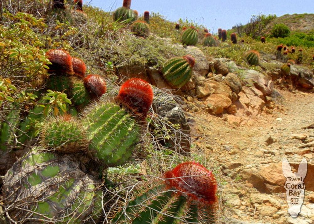 WM_ram cactus.jpg
