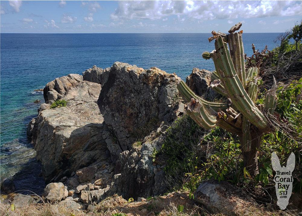 WM_yawzi cactus view.jpg