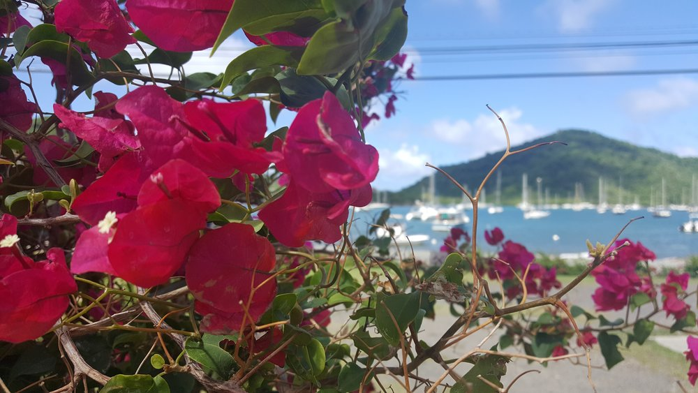 coral bay through flowers 1.jpg