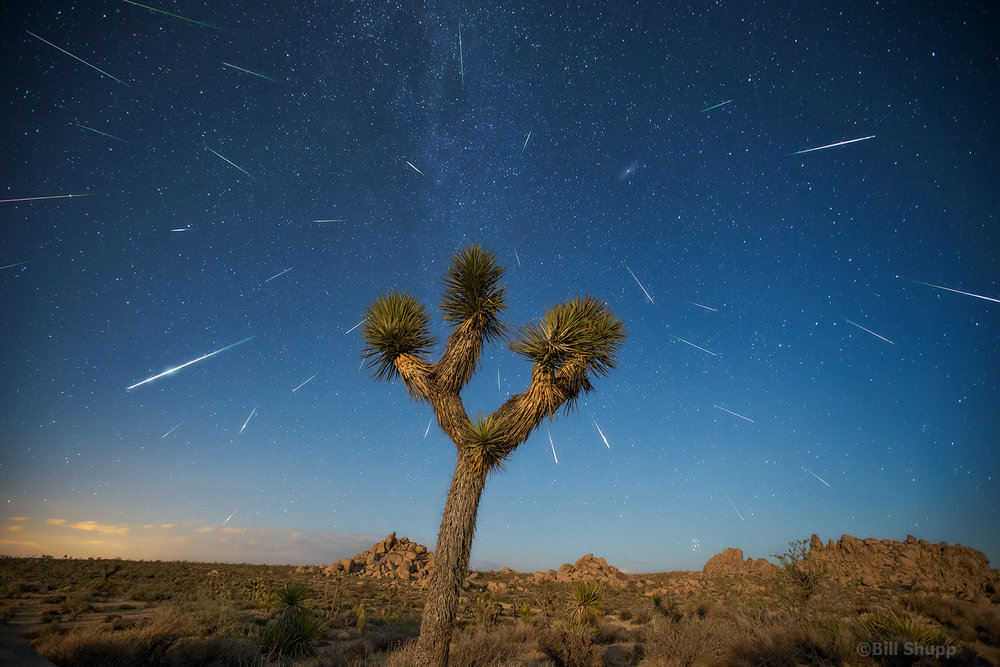 Perseids Over Joshua Tree