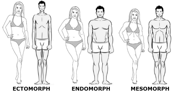 Body-Types..png
