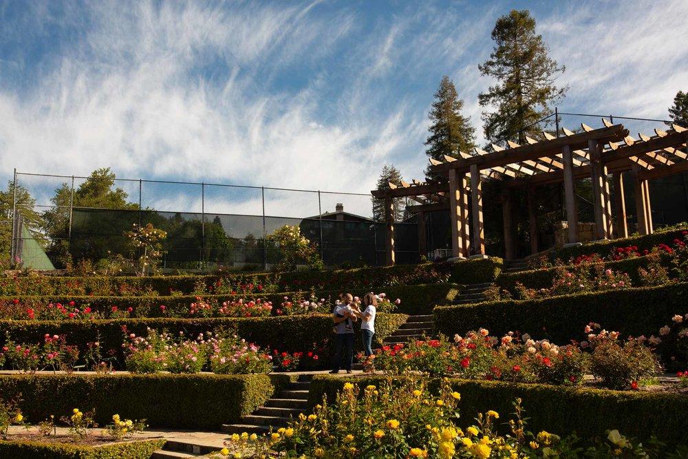 Berkeley-Rose-Garden-Family-Photos-14.jpg