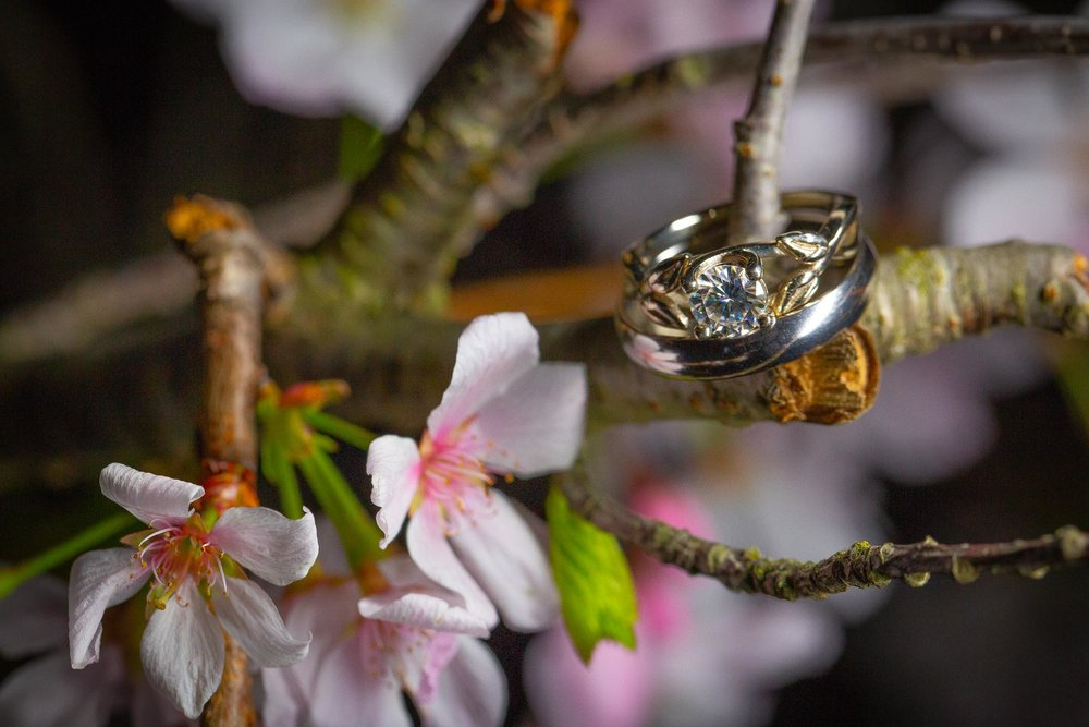 Hakone-Gardens-wedding-Saratoga-79.jpg