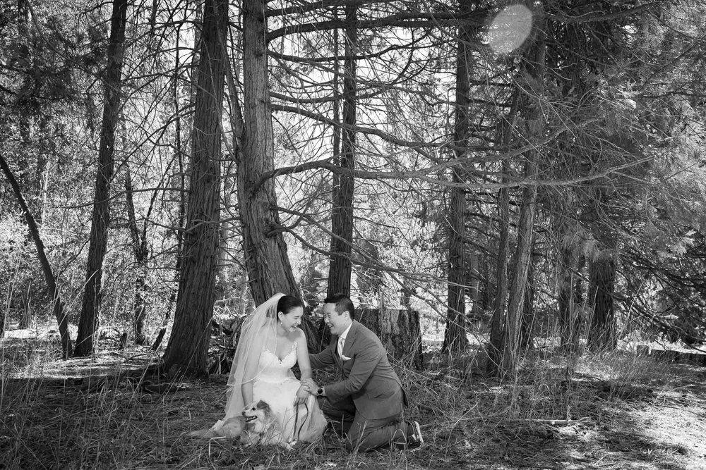 The redwoods in Yosemite wedding-35.jpg