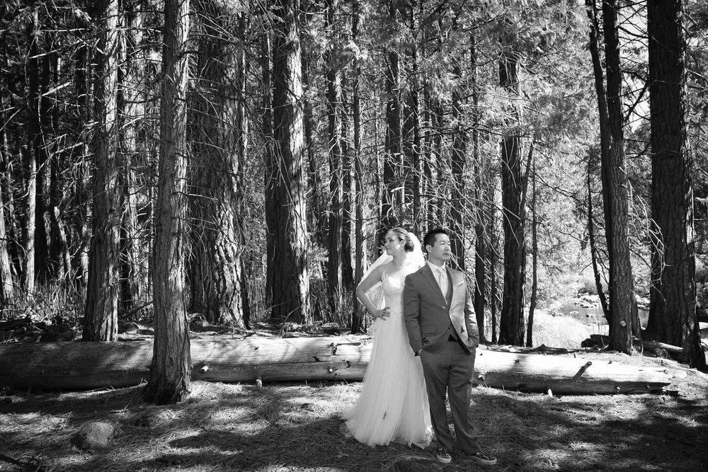 The redwoods in Yosemite wedding-39.jpg