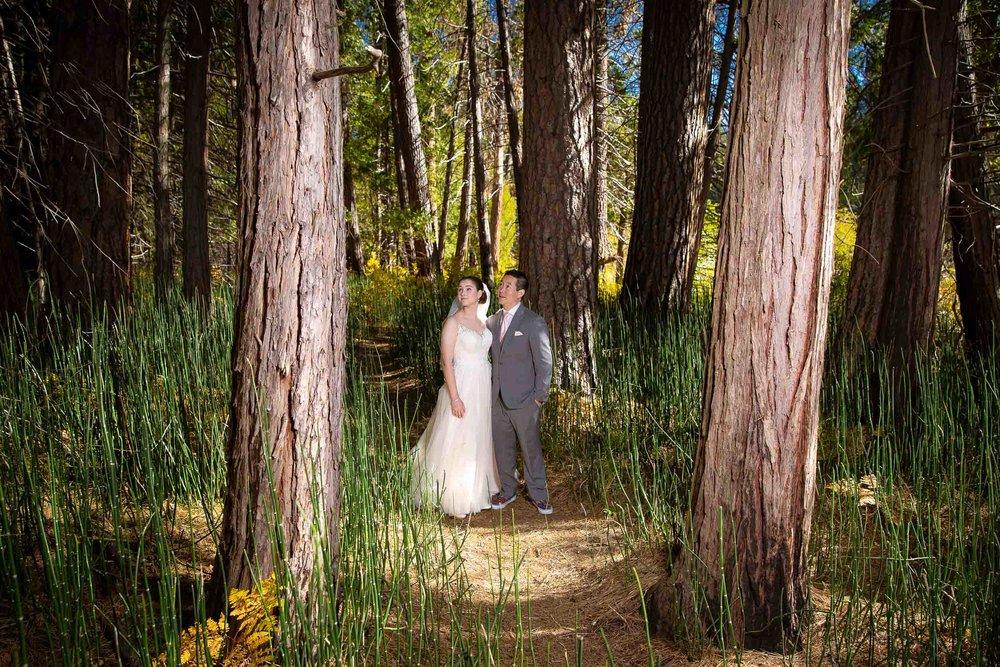 The redwoods in Yosemite wedding-43.jpg