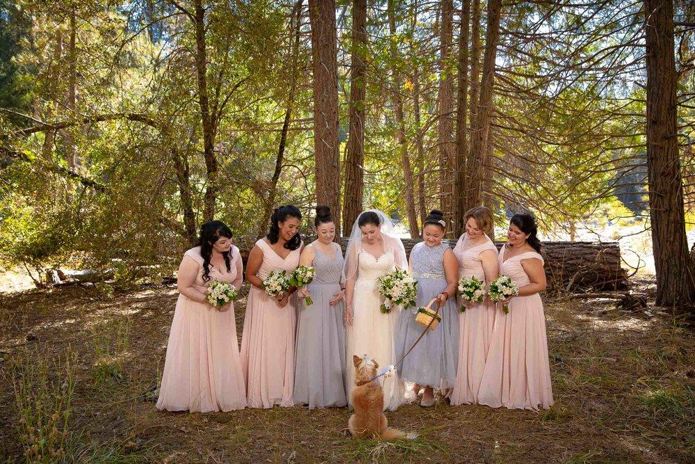 The redwoods in Yosemite wedding-46.jpg