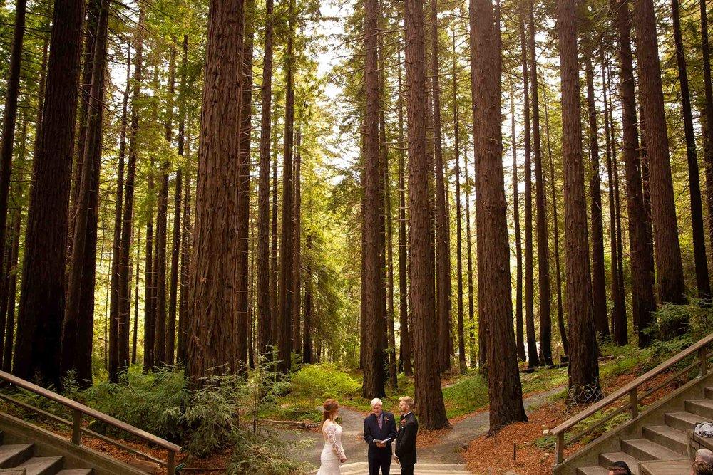 Berkeley Botanical Garden Wedding Ceremony in the Redwood Grove Ceremony and SF Bay Wedding Cruise Reception-31.jpg