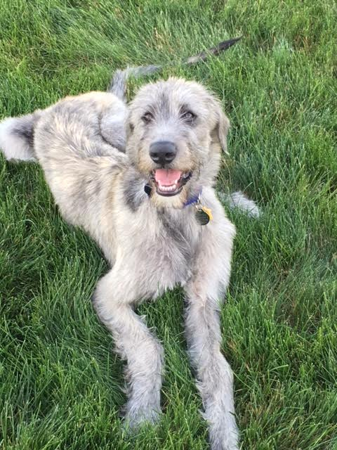 graycie is friendly and outgoing with everyone she meets. -