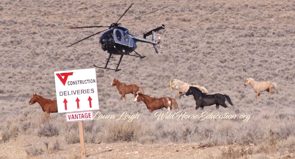 Wild Horses are often removed for convenience of profit driven interests. -