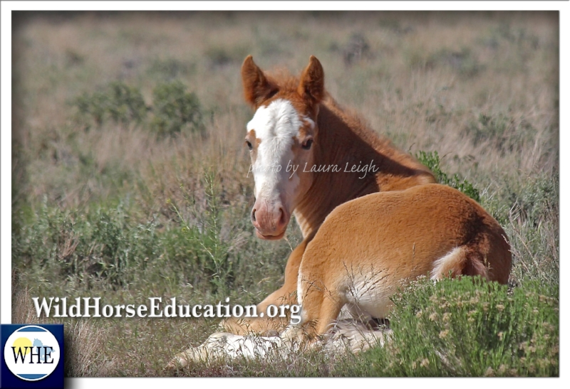 """Devoted to protecting our wild ones and the land they need to survive. Our teams motto is """"Horse first."""" Meet team WHE."""