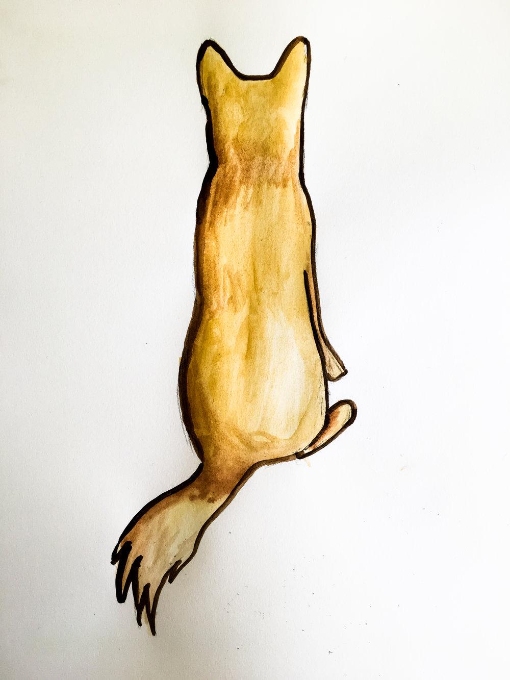 Dingo back.jpg