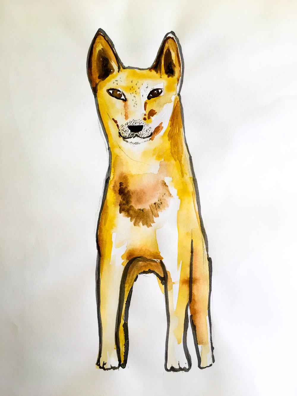 Dingo front.jpg