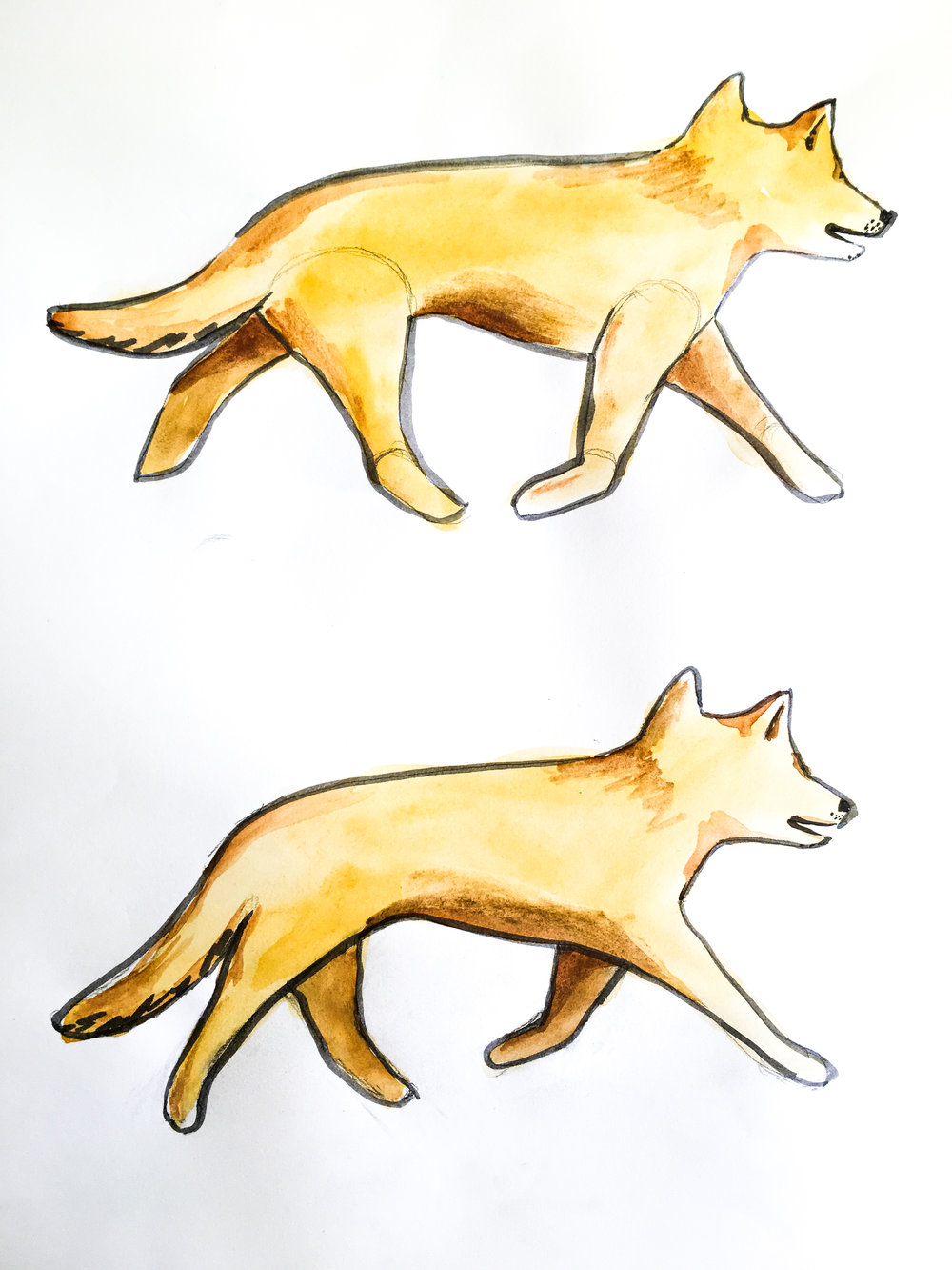 Dingo walk.jpg