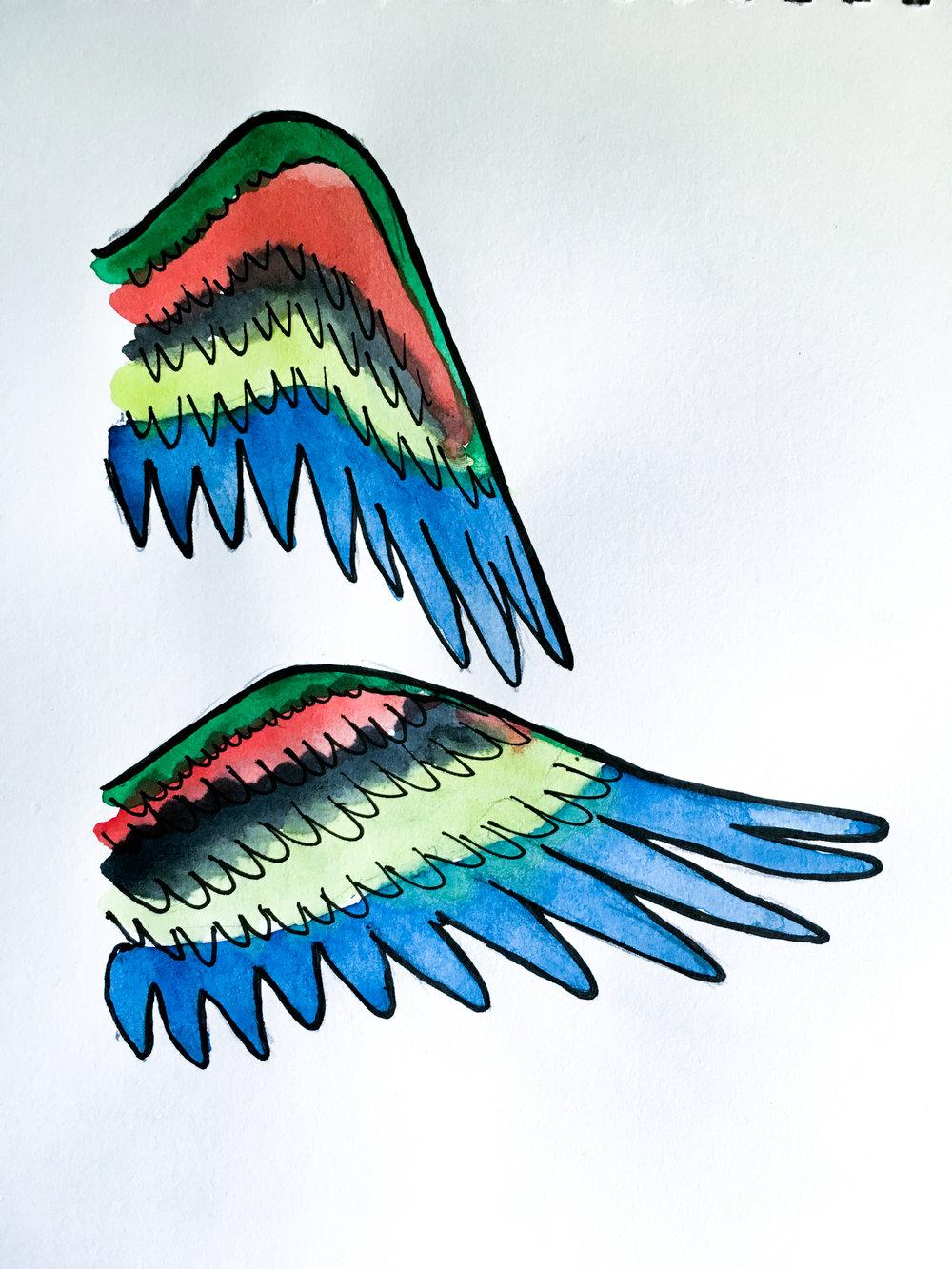 Lorrikeet wings.jpg