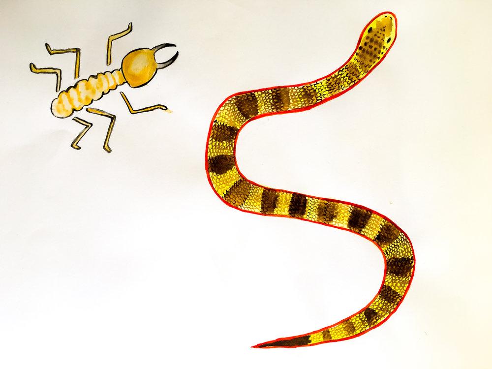 Snake and termite.jpg