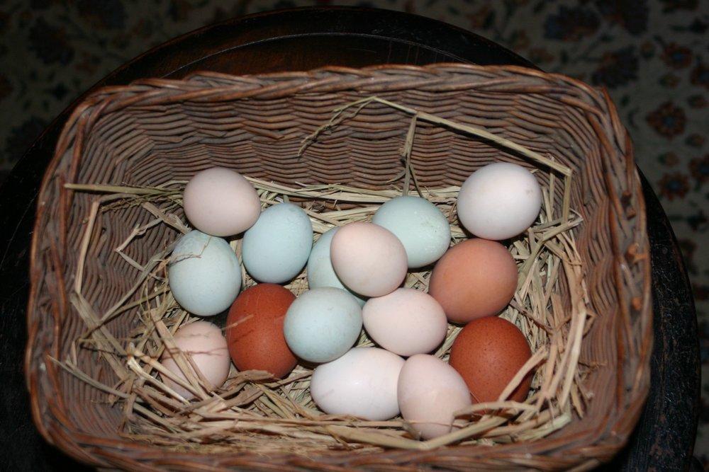 eggs IMG_6134.jpg