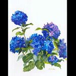 kathy winter hydrangeas.jpg