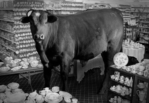 bull-china-shop.jpg