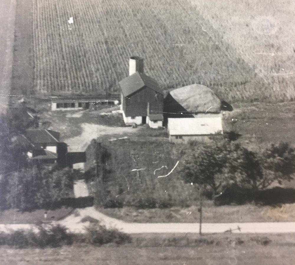 The farm in 1954 -