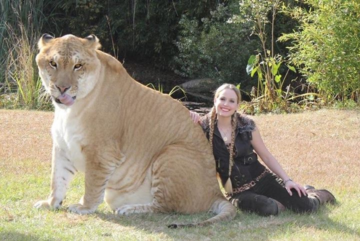 liger-hercules-many-records-guinness-book
