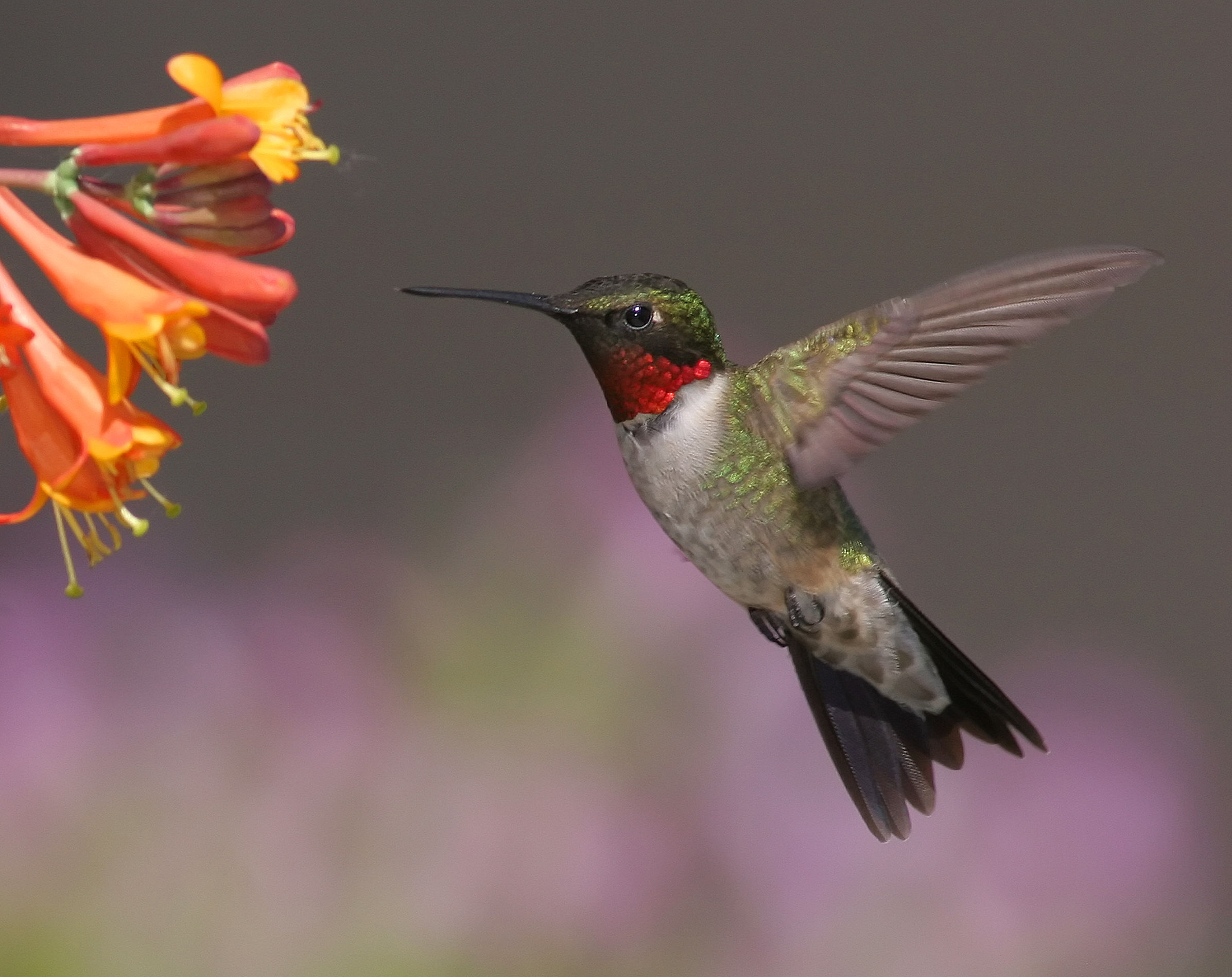 Image of a hummingbird. Geddit? Anyway, humming it out is a great way to help when writing lyrics.
