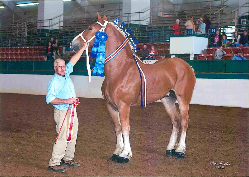king-2012-nc-halter-best-of-show.jpg