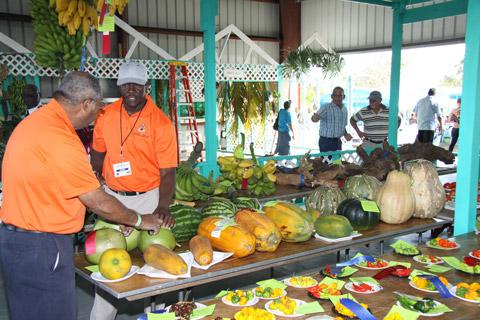 Agricultural-Show-Cayman-1.jpg