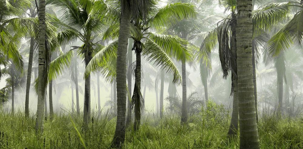 Brand Image_Coconut Trees.jpg