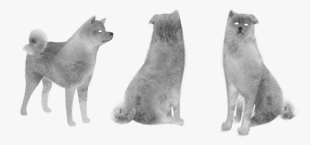 dogprofile.jpg