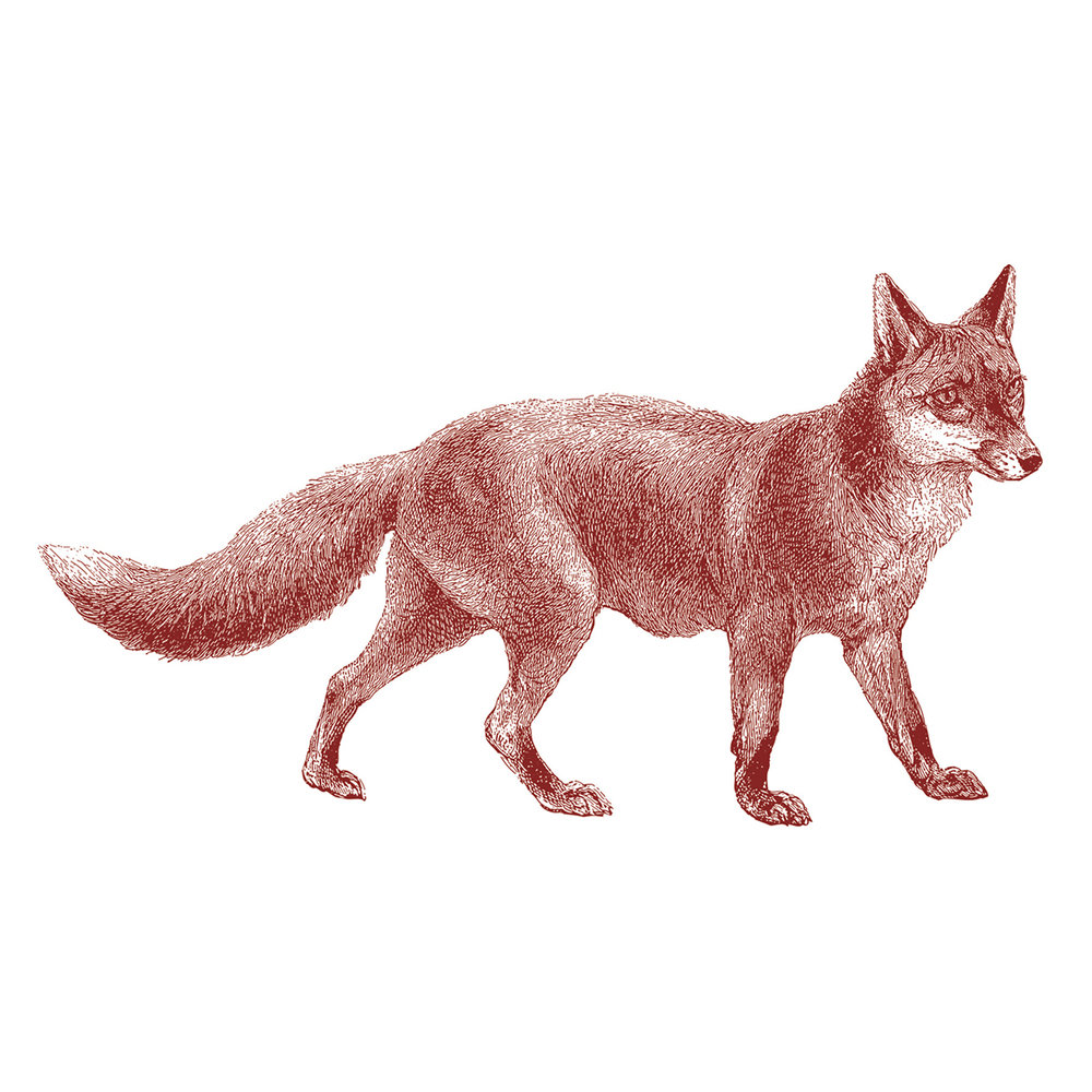 Web-Fox.jpg