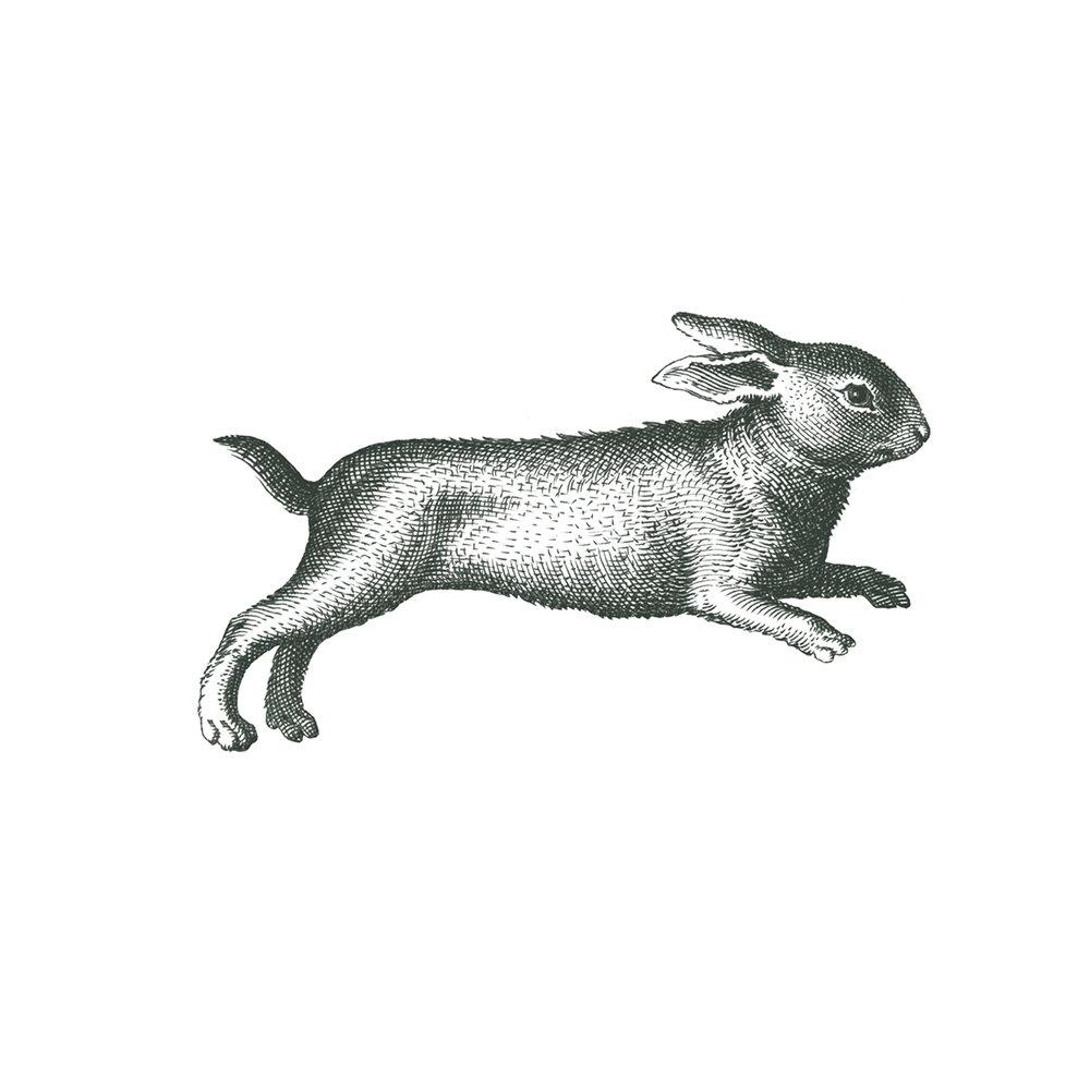 Web-Rabbit.jpg