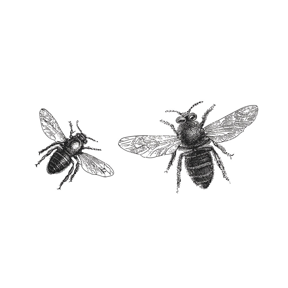 Web-Bees.jpg