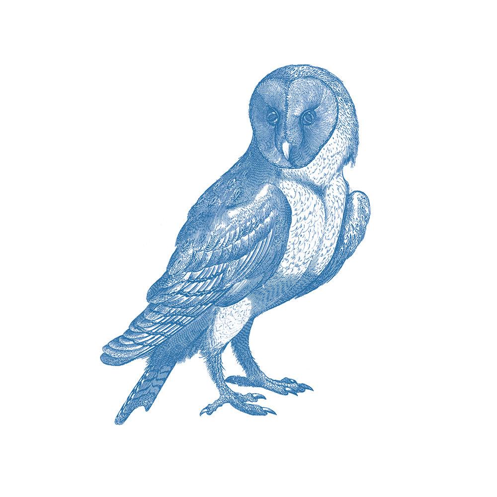 Web-Owl.jpg